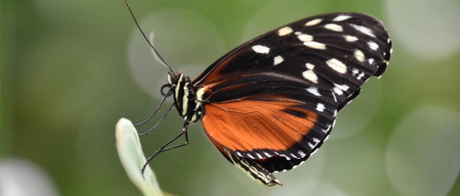Schmetterling in Großaufnahme © Alexandra Menges