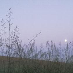 Der Vollmond steht über einem Hügel. Gräser im Vordergrund. © Robin Menges